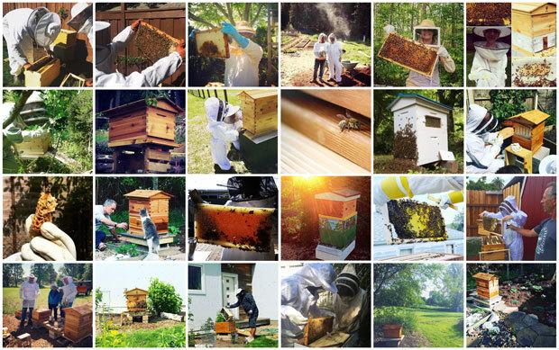 Insolite du crowdfunding : Le robinet à miel